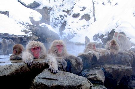 Embrace the cold at the Snow Monkey Hot Springs, Nagano, Japan, site of the 1998 Winter Olympics and home to dozens of ski areas.