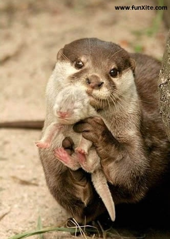 newborn animals pictures - Google Search