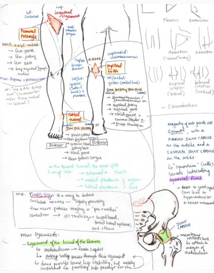 Großartig Emt Anatomie Und Physiologie Flash Karten Fotos ...