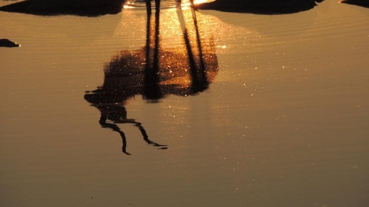 When the sun goes down .... kudu @ Etosha Halali.