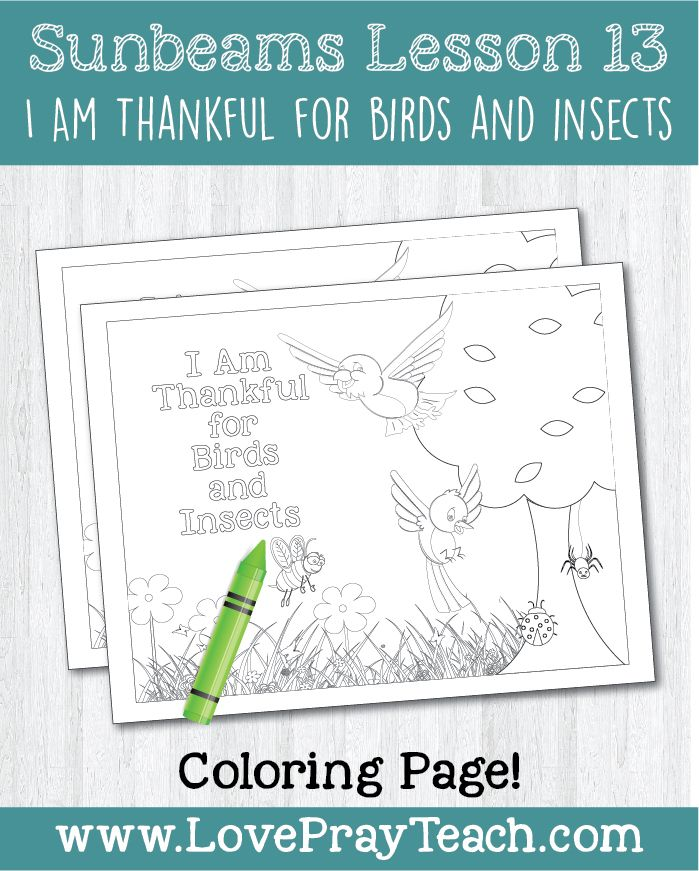 Primary 1 Sunbeams Lesson 13 I Am Thankful For Birds And Insects
