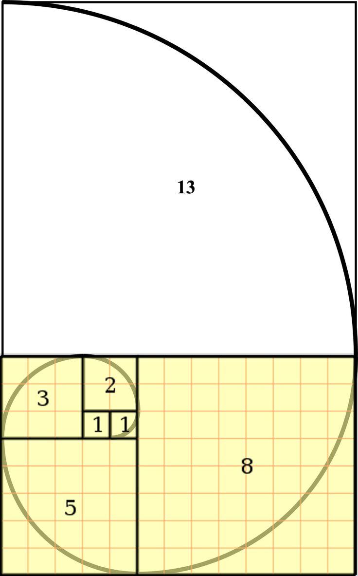 ESPIRAL de Fibonacci. (sus amigos decían que tenía la cabeza llena de números porque trataba de encontrar relaciones matemáticas en todas las cosas que le rodeaban)
