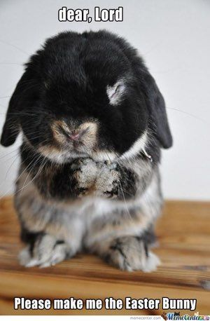Happy Easter, everybody! Check out this list for the funniest and cutest Easter memes and pictures. Bunnies are pretty much the cutest animals ever so there will be lots of oohing and awing as you peruse this collection of Easter images. Hopefully, you'll find some good laughs, too! Vote for the fu...