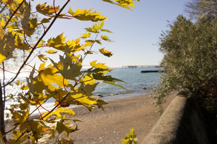 #Centre #Island #Pier #Maple #Leaf