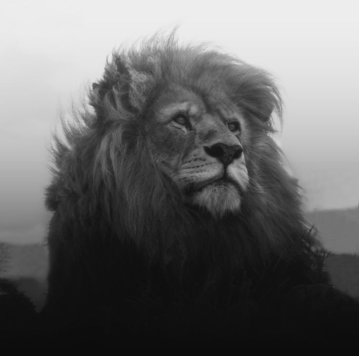 The King by Gry Heubach on Fivehundredpx LION / for more inspiration visit http://pinterest.com/franpestel/boards/