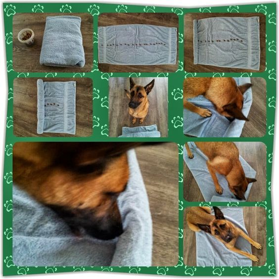 Brain Game - Place treats in a line on a towel, roll up and let the Dog unroll the towel.