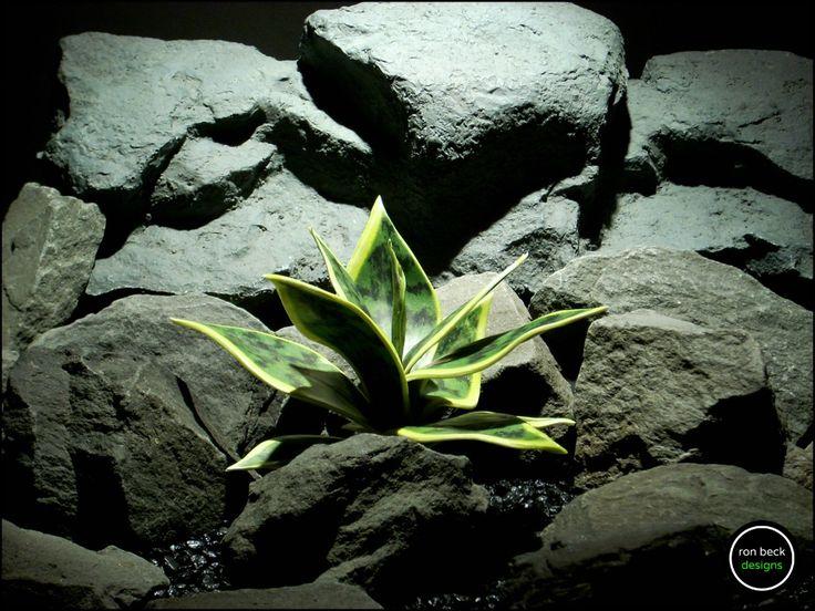 reptile plant: sanseveria, snake plant succulent. prp171 from ron beck designs. #ronbeckdesigns #gotplants? #aquarium #reptile #plants