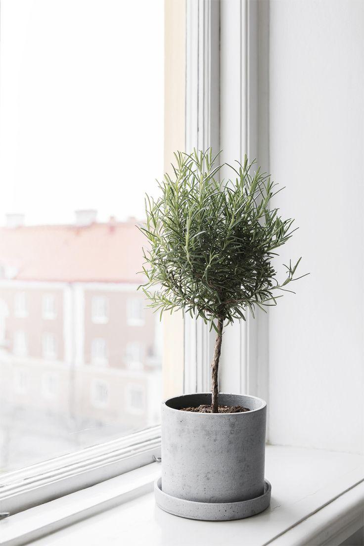APARTMENT IN TRIPOLIS | plants | home | deco | decor