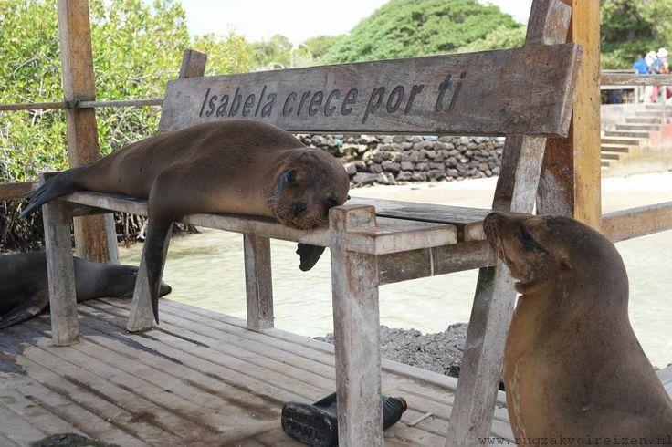 Isabala Galapagos zeeleeuwen, Ecuador - Rugzakvolreizen.nl