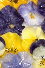 Sweet glazed edible pansey flowers.