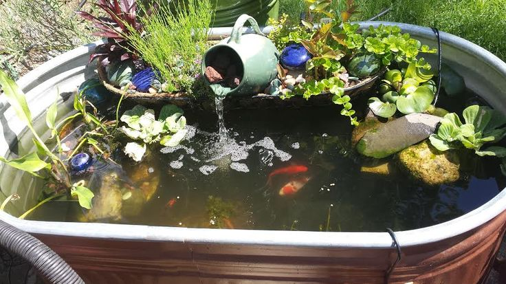 "my stock tank ""pond"" - The Planted Tank Forum"