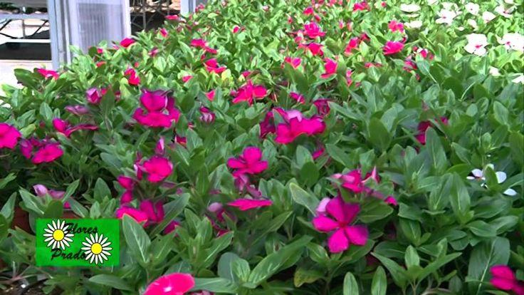 Las 25 mejores ideas sobre plantas de sombra en pinterest - Plantas de sol y sombra ...