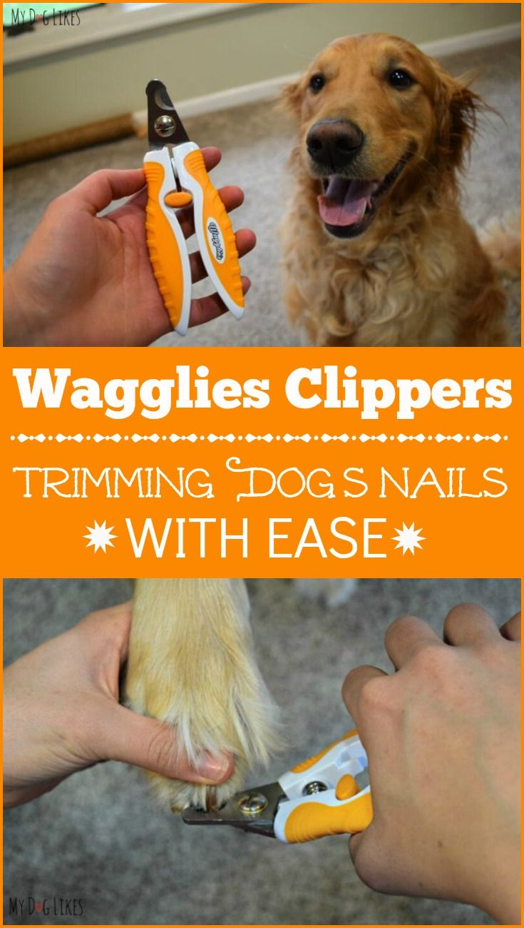 how to trim puppy nails with clippers