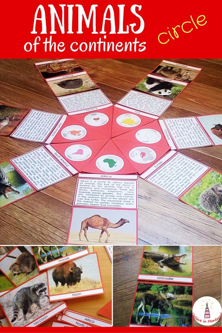 Animals of the continents Montessori-inspired circle puzzle printable cards geography material