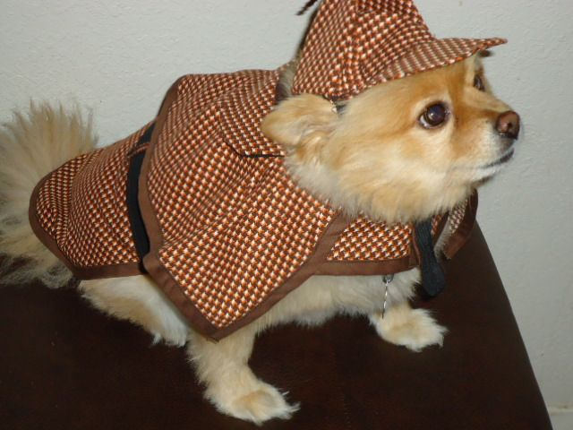 our big dog sherlock holmes halloween costumes are great for large dogs they are adorable