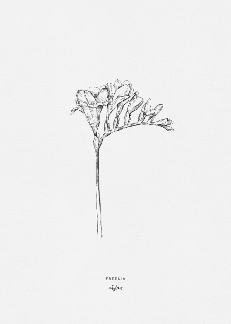 404 404 Realistic Flower Drawing Flower Drawing Botanical Line Drawing