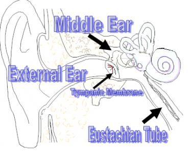 Middle ear anatomy.
