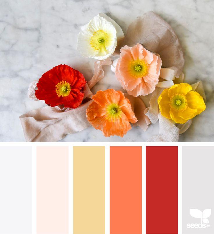 Color Poppy - http://www.design-seeds.com/flora/color-poppy