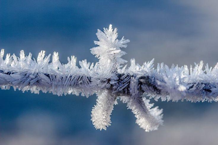 Frozen branch | Inspirowani Naturą