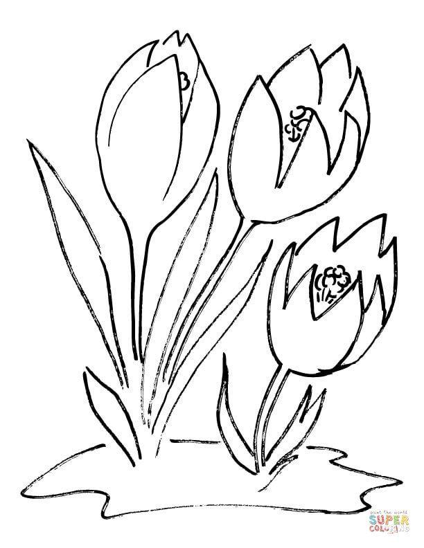 Crocus Flower Super Coloring Flower Coloring Pages Coloring Pages Crocus Flower