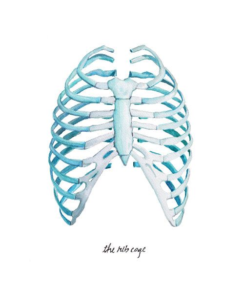 Rib Cage Watercolor Print Anatomy Watercolor Art by LyonRoad #chiropractic Chiropractic Arts Center of Austin, P.C. :: www.cacaustin.com :: (512) 346-3536