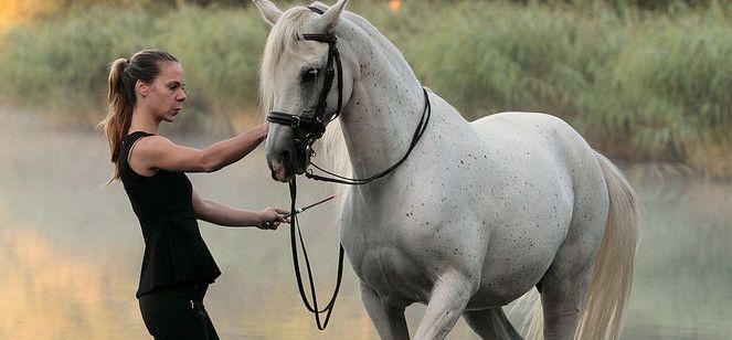 Der Kurs am 20.3.16 in Büdingen (Hessen) zeigt, wie vielfältig Pferde vom Boden aus gearbeitet werden können. Zirkuslektionen Freiheitsdressur Julia Thut