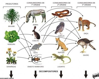 caatinga animal,planta,mamiferos,peixe,aves,repteis,jacare,insetos e etc nome das especies | Os esquemas abaixo exemplificam melhor este conceito de teias ...
