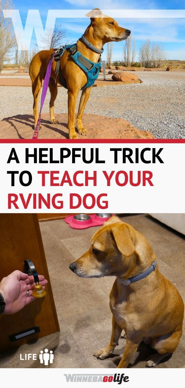 A Helpful Trick To Teach Your Rving Dog Dog Training Training