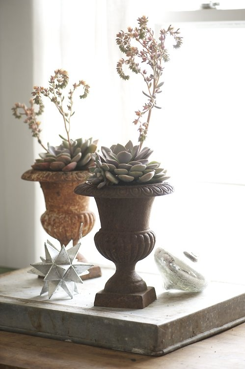 Echeveria, from inside The Unexpected Houseplant by Tovah Martin. Photo credit Kindra Clineff.