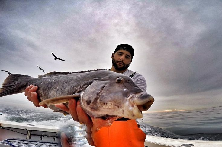 Nice tog to end the trip.. Rubber lips  #saltlife #tautog #blackfish #boating #boatlife #boats #offshorefishing #offshorelife #offshore #gettinbent #onthewater #ocean #fishing #fish #jerseyshore #canyonreels #gopro #goprophotography #goprohero4  @canyonreels by carmine_tango
