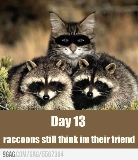animals raccoons weasels friends - photo #42