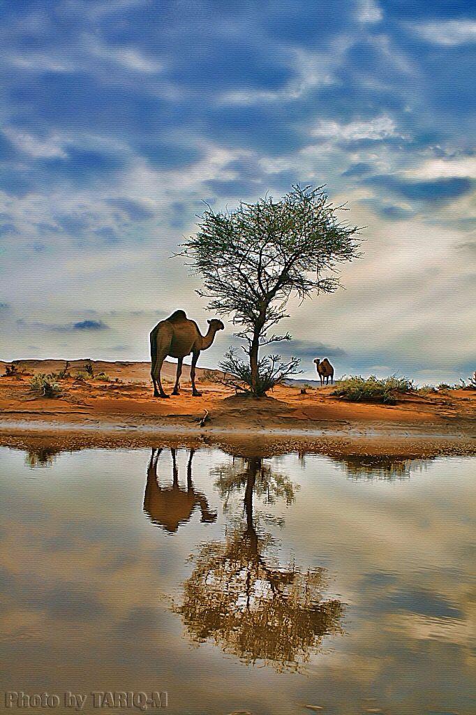 Saudi Arabian desert   desert الصحراء   Desert photography ...
