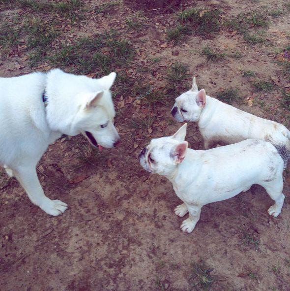 Making friends at Lafayette Dog Park at Youth Park - Lafayette, LA - Angus Off-Leash #dogs #puppies #cutedogs #dogparks #lafayette #louisiana #angusoffleash