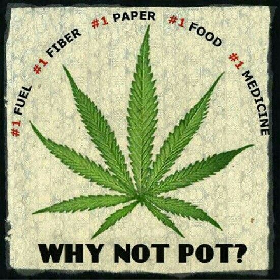 ☯☮ॐ American Hippie Psychedelic Herbal Weed ~ Why Not Pot
