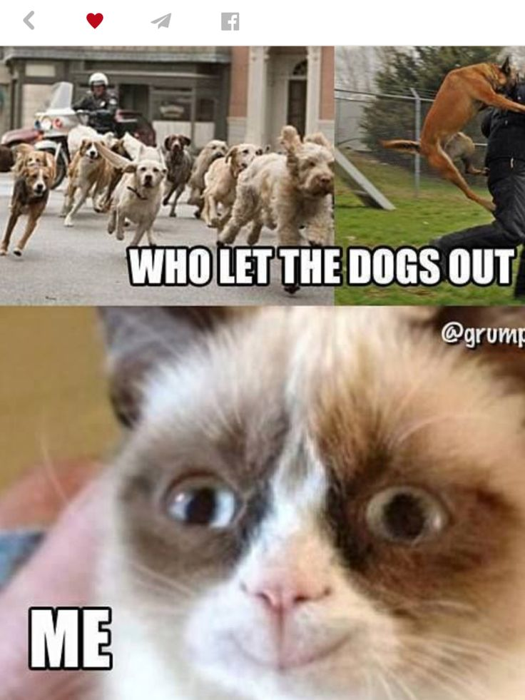 Ha grumpy cat I can't believe that you smiled