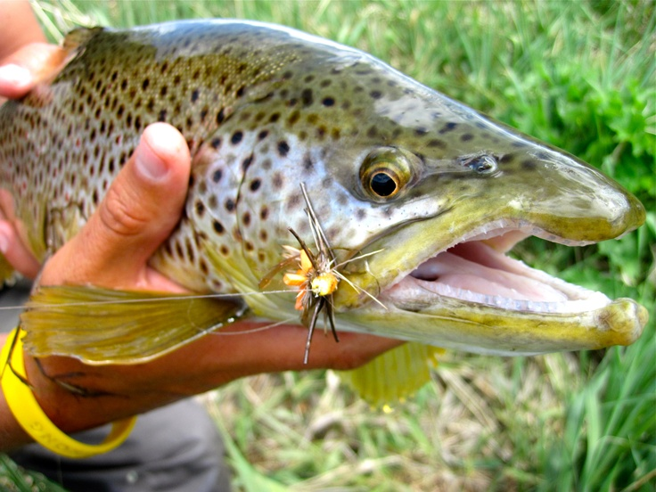 Utah fly fishing fishbox pinterest salmon flies fly for How to fly fish for bass