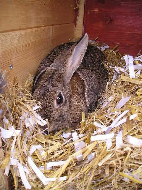 62 Best Images About Rabbit Hutches On Pinterest Rabbit