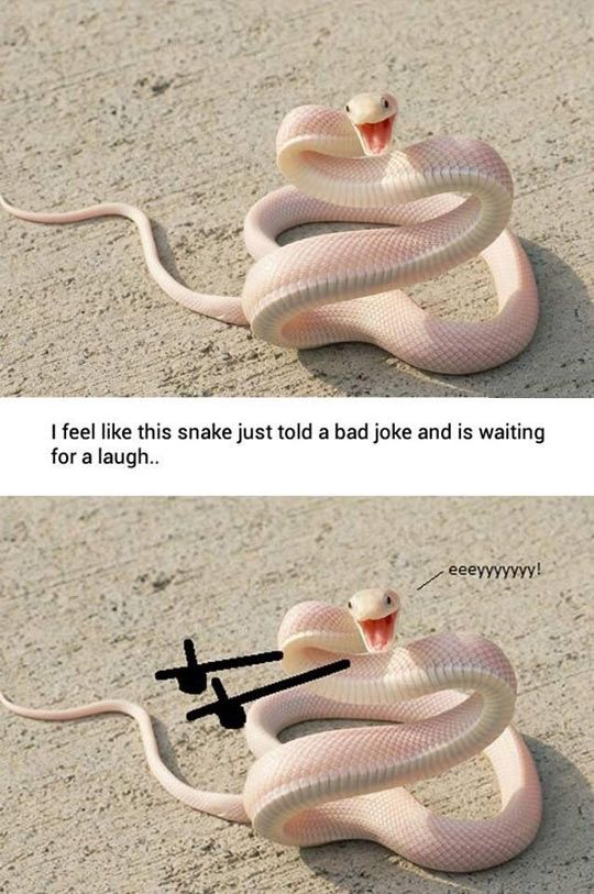 Bad Joke Snake