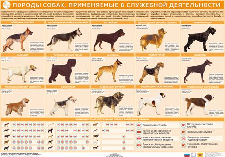 Military Working Dog Breeds Dog Breeds Used For Military Service