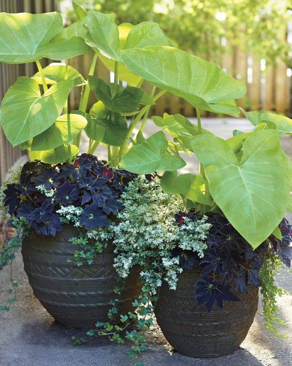 Endres fills his home garden with more than 60 planted containers (he has another 80 at his restaurant and nursery). Here are his foolproof strategies for creating pots that dazzle and delight. (Customize your own potting-soil blend.)Impressive plants, or thrillers, like the tropical 'Lime Zinger' elephant's ear, command attention and serve as a focal point. A large pot and the extra volume of soil allow the container to be underplanted, as it is here with the spiller Pilea microphylla...