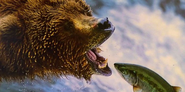 ICYMI: Bitcoin bears are being unleashed onto the cryptocurrency's futures market