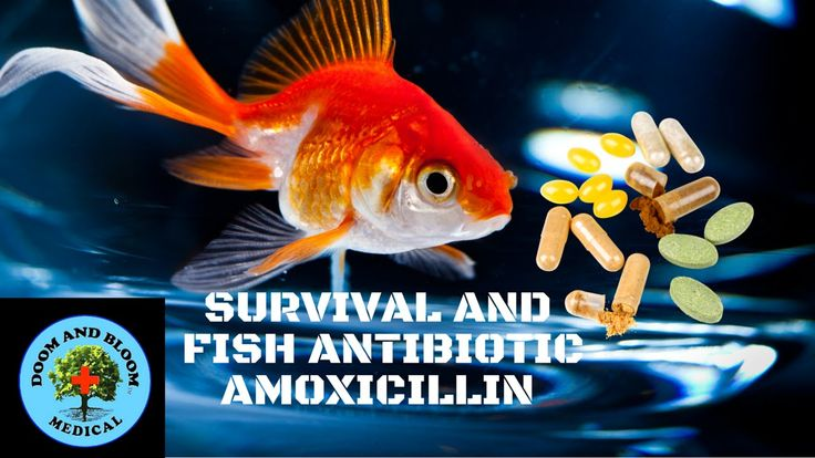 A new series on Survival and Fish Antibiotics. Amoxicillin uses, dosages, side effects and precautions. Joe Alton, MD of http://www.doomandbloom.net/. Cipro ...