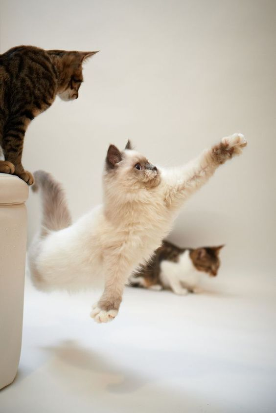 Best Cats In Action Images On Pinterest Cat Children And Dog - 29 cute cats that have morphed into cat loaves