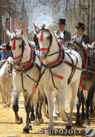 Viernes de Feria en Jerez, Spain - La elegancia del 'noble bruto' - Foto: Miguel Angel Gonzalez