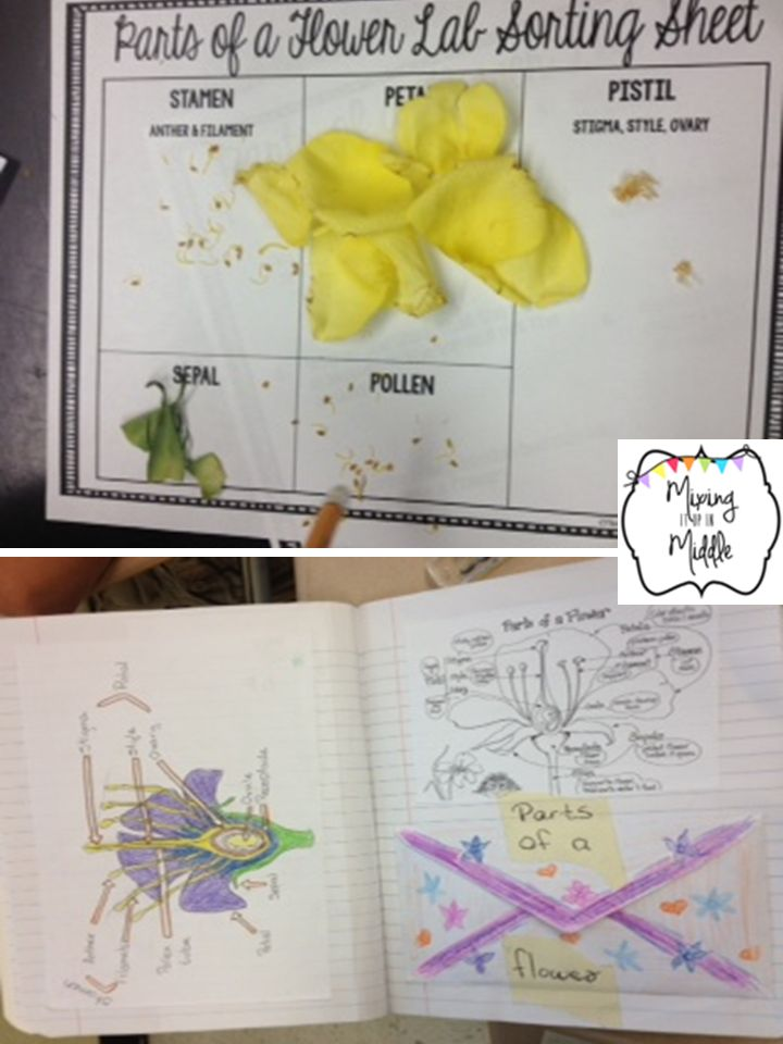 Five for Friday!  Games, Science Labs and More! http://www.teacherspayteachers.com/Product/Parts-of-a-Flower-Dissection-Science-Lab-1433523