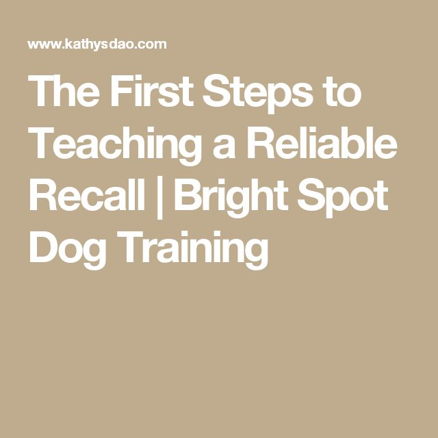 The First Steps to Teaching a Reliable Recall | Bright Spot Dog Training