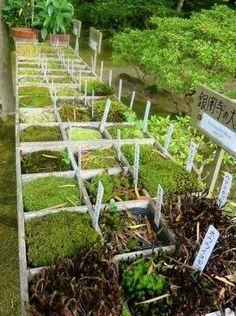 Calendário da horta… como e quando plantar a sua!como e quando plantar.como plantar e guando