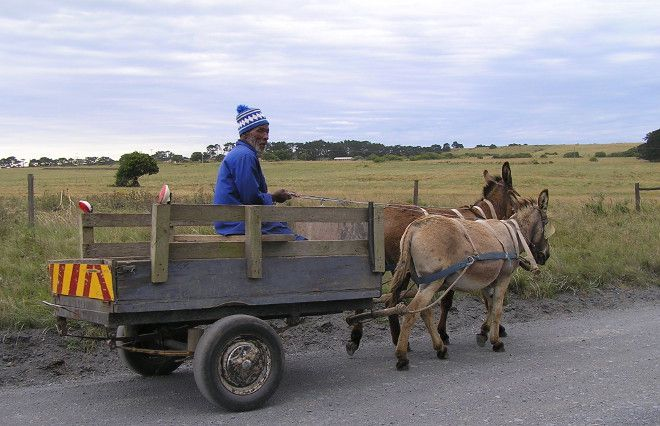 Elderly man with his donkey cart fully decked with a chevron on the back! Eastern Cape.
