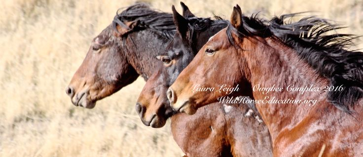 Editorial, LLeigh Wild horses draw us into amazing territory that reflects so much of who we are. We can see an amazing resilient survivor that has thrived in the harshest places in the nation. A b…