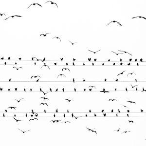 写真家の水谷吉法川鵜の大群と電線で譜面を描いた新作を公開